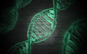 3.AGAと遺伝